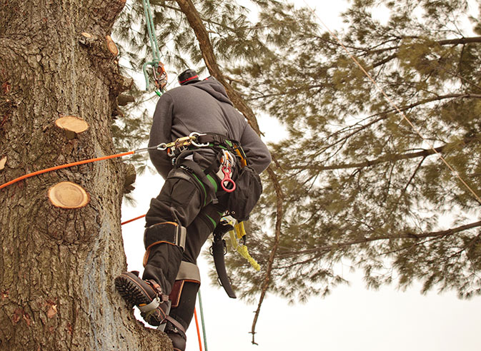 Northshore Tree Services Inc. employee trimming a tree