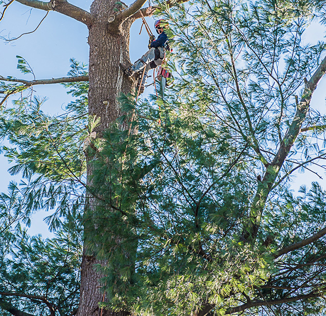 Northshore Tree Services Inc.: Tree planning in Boston, Dorchester and Dedham
