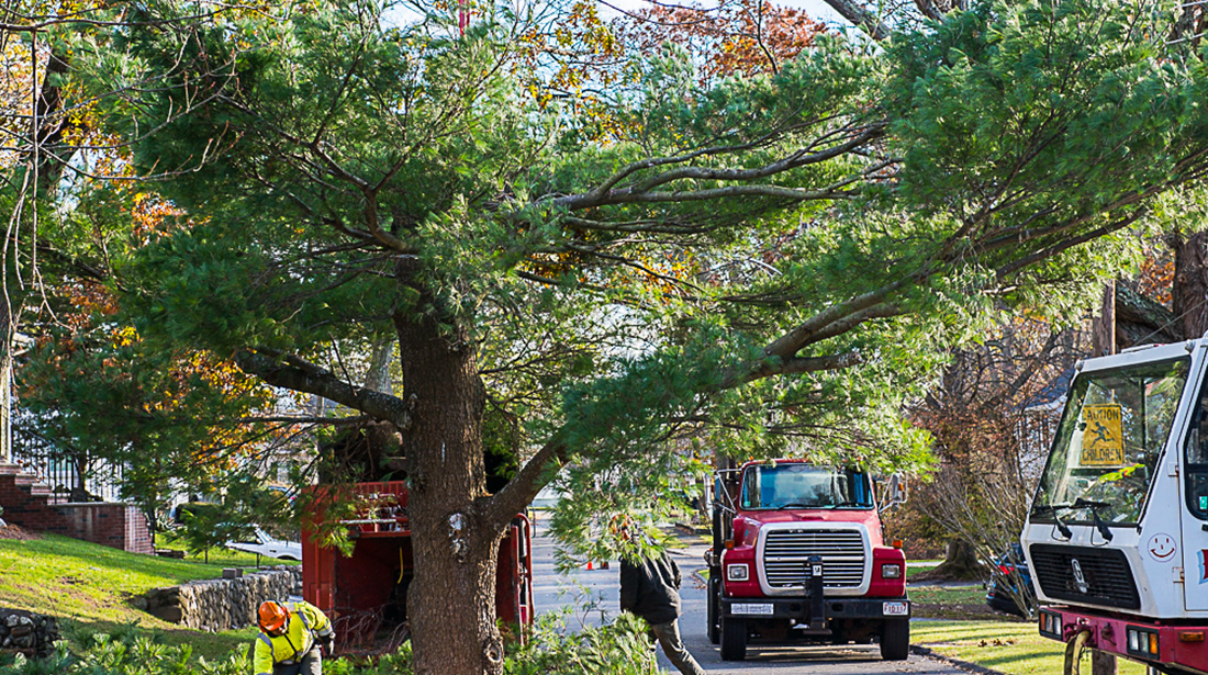 Northshore Tree Services Inc.: Stump and tree removal in Boston, Dorchester and Dedham