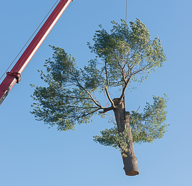 Northshore Tree Services Inc.: Tree pruning in Boston, Dorchester and Dedham